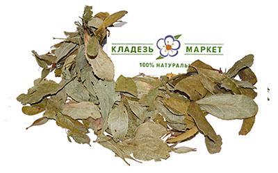 Барбарис Обыкновенный Berberis Vulgaris, Листья