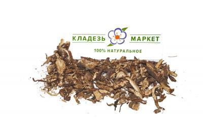 Бедренец Камнеломковый Pimpinella Saxifraga, Корень