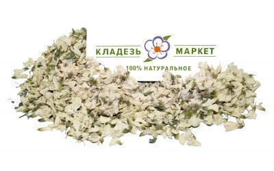 Белая Акация Robinia Pseudoacacia, Цветки