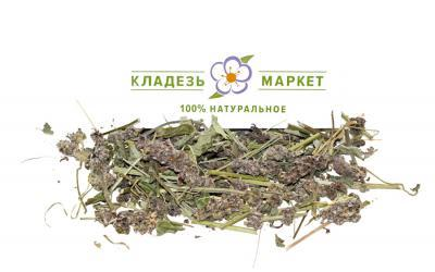 Буквица Лекарственная Betonica Officinalis, Трава