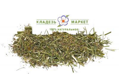 Донник Лекарственный (Буркун Жёлтый) Melilotus Officinalis, Трава