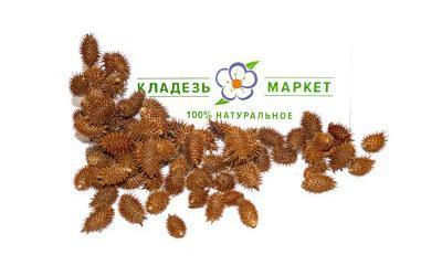 Дурнишник Обыкновенный Xanthium Strumarium, Плоды
