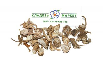 Дягиль Лекарственный Archangelica Officinalis, Корень