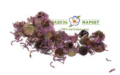 Эхинацея Пурпурная Echinacea Purpurea, Цветки