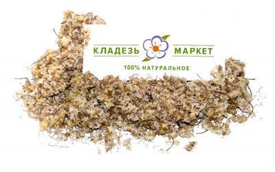 Каштан Конский Aesculus Hippocastanum, Цветки