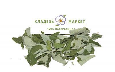 Клубника (Земляника Мускусная) Fragaria Moschata, Лист