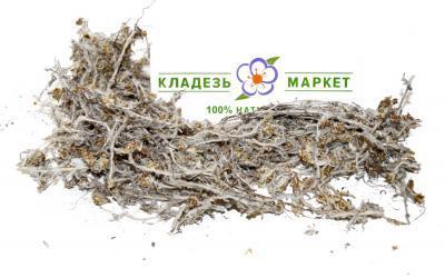 Сушеница Топяная (Болотная) Gnaphalium Uliginosum Трава