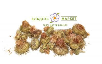 Татарник Колючий Onopordum Acanthium, Цветки