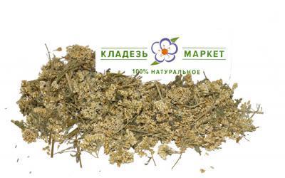 Тысячелистник Обыкновенный Achillea Millefolium, Цветки