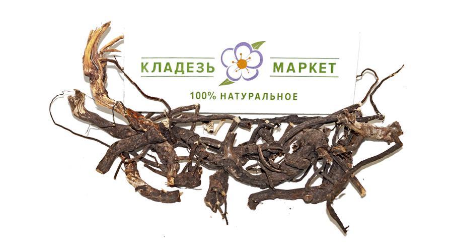 Родовик Лікарський (Кровоголовка Звичайна) Officinalis, Корінь